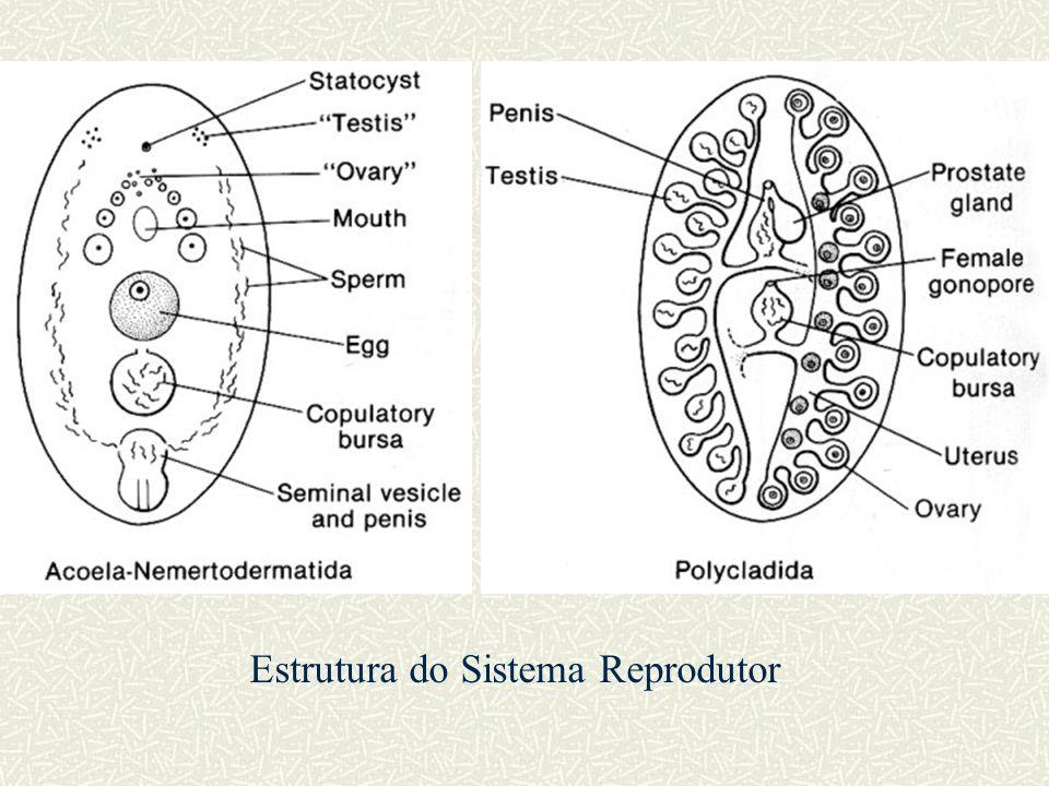 Estrutura do Sistema Reprodutor