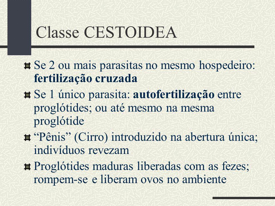 Classe CESTOIDEA Se 2 ou mais parasitas no mesmo hospedeiro: fertilização cruzada.
