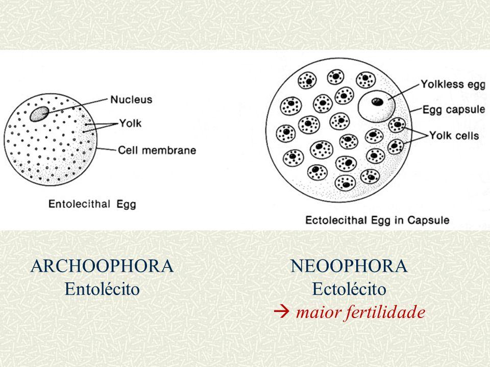 ARCHOOPHORA Entolécito NEOOPHORA Ectolécito  maior fertilidade