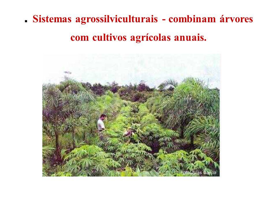 . Sistemas agrossilviculturais - combinam árvores com cultivos agrícolas anuais.