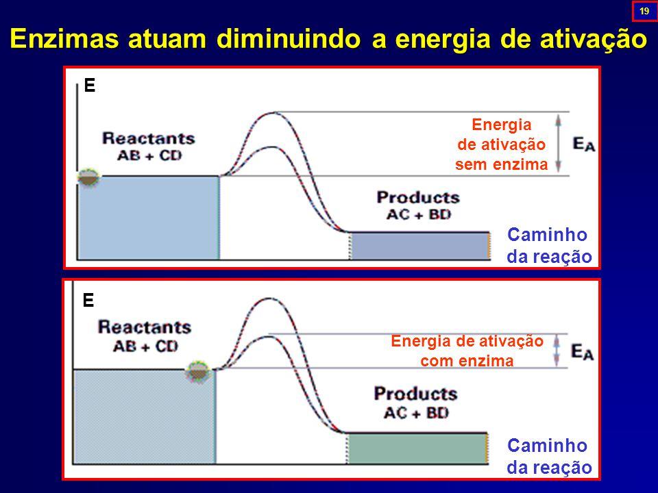 Enzimas atuam diminuindo a energia de ativação