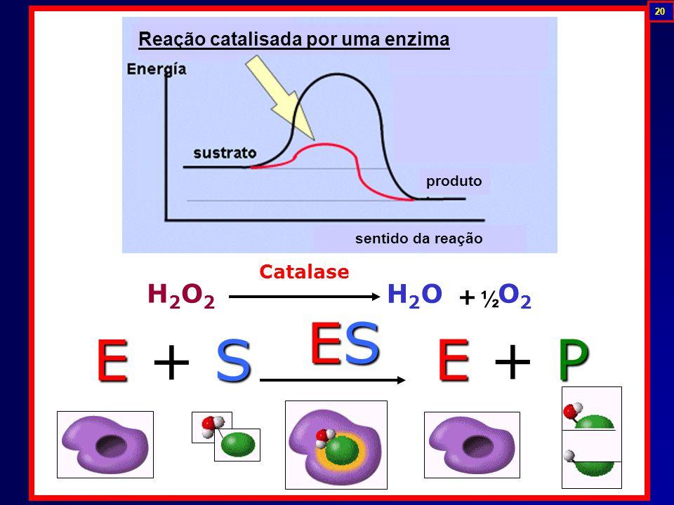 Reação catalisada por uma enzima