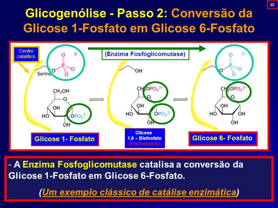 (Um exemplo clássico de catálise enzimática)