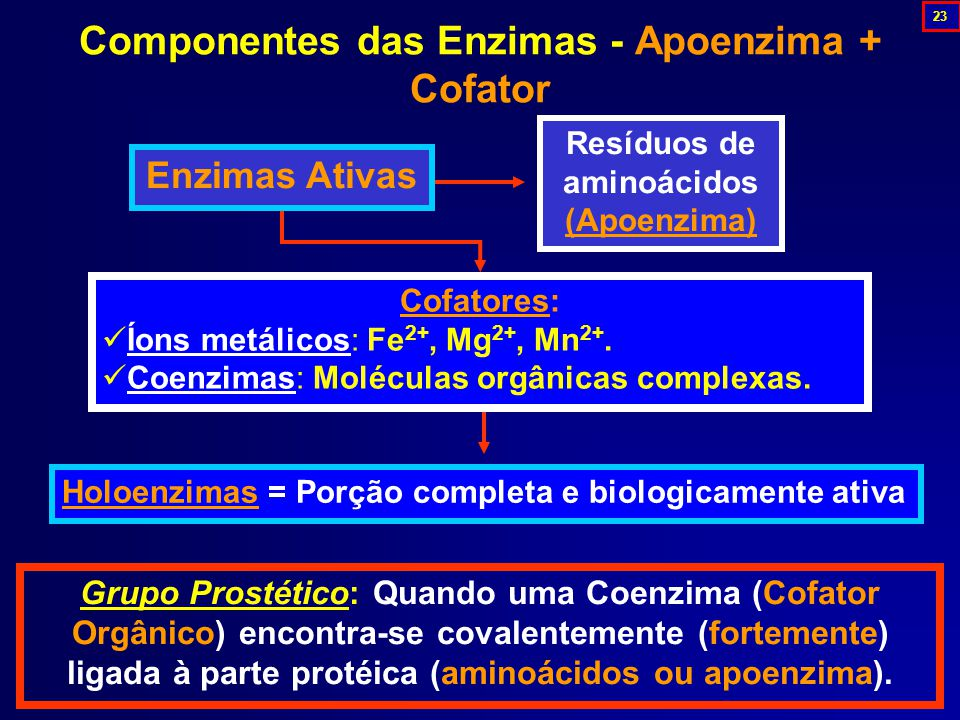 Componentes das Enzimas - Apoenzima + Cofator