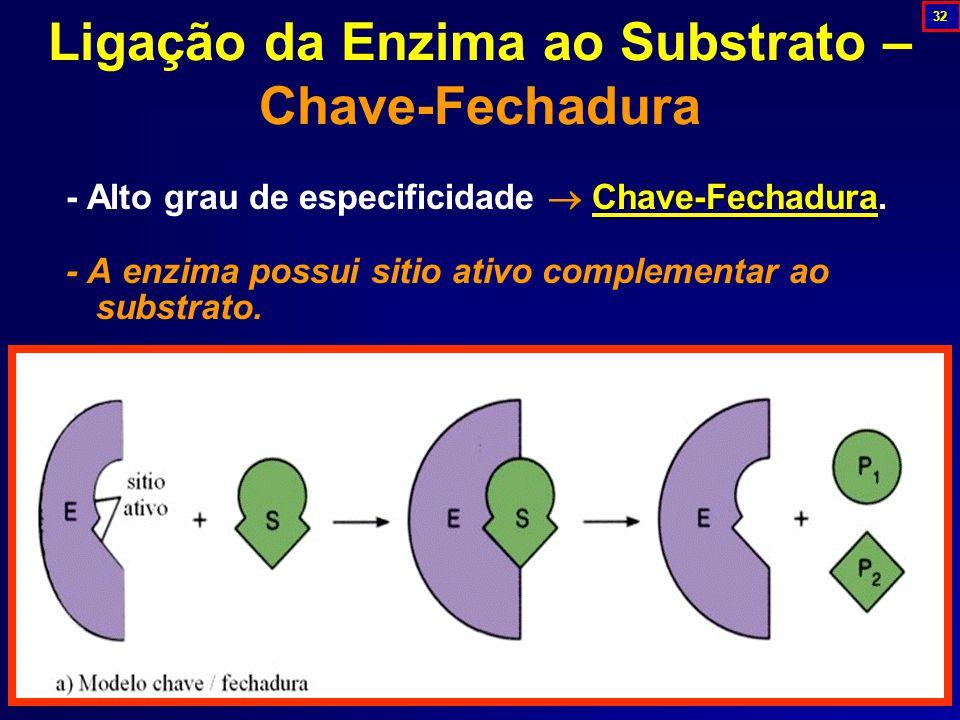 Ligação da Enzima ao Substrato – Chave-Fechadura