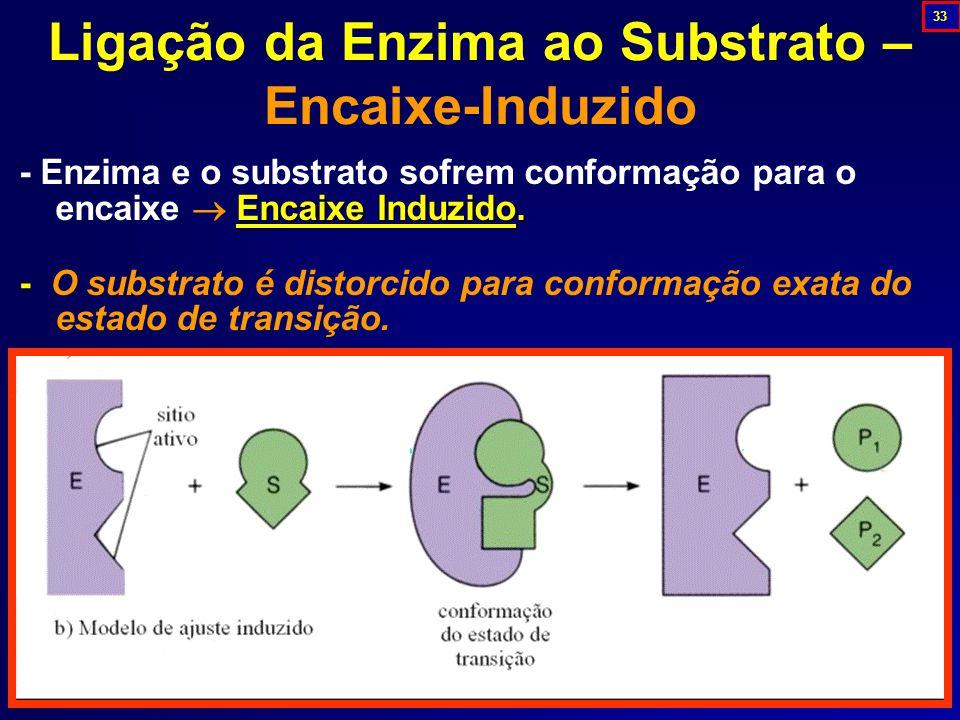 Ligação da Enzima ao Substrato – Encaixe-Induzido