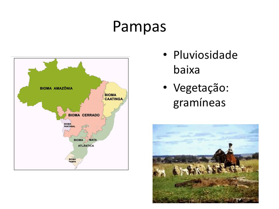 Pampas Pluviosidade baixa Vegetação: gramíneas