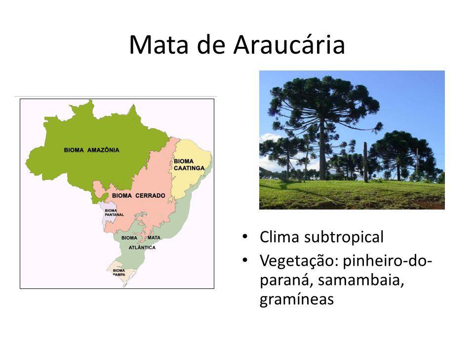 Mata de Araucária Clima subtropical