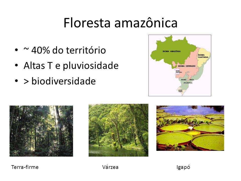 Floresta amazônica ~ 40% do território Altas T e pluviosidade
