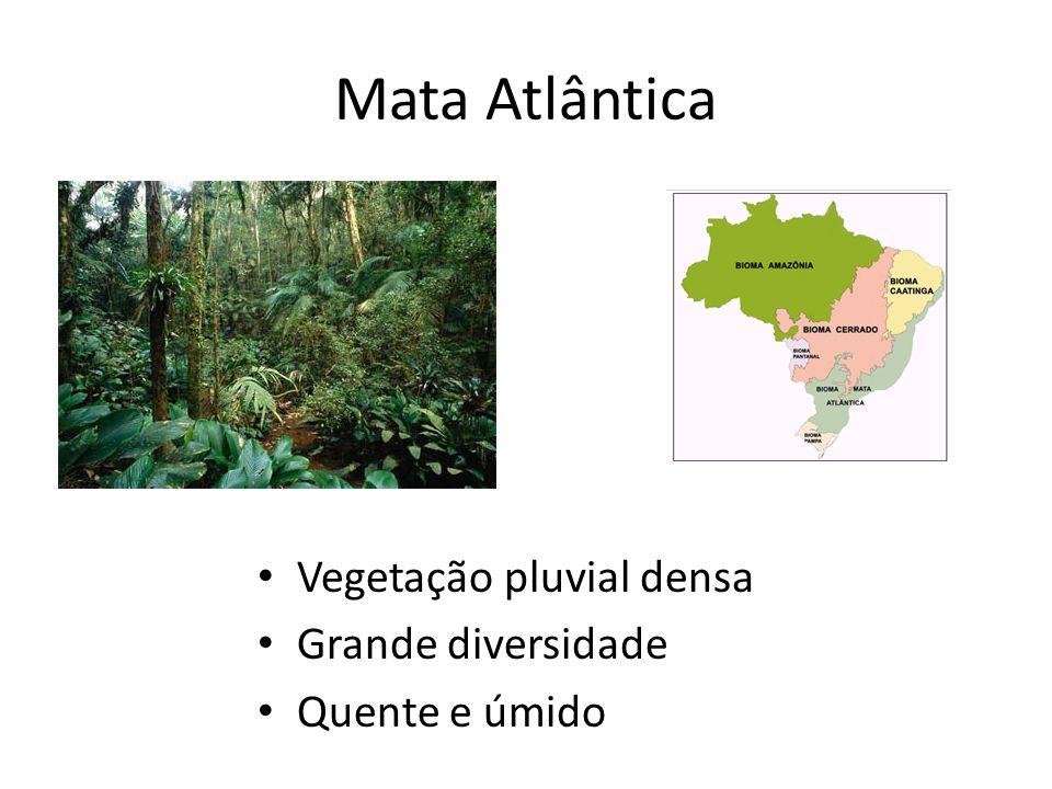 Mata Atlântica Vegetação pluvial densa Grande diversidade