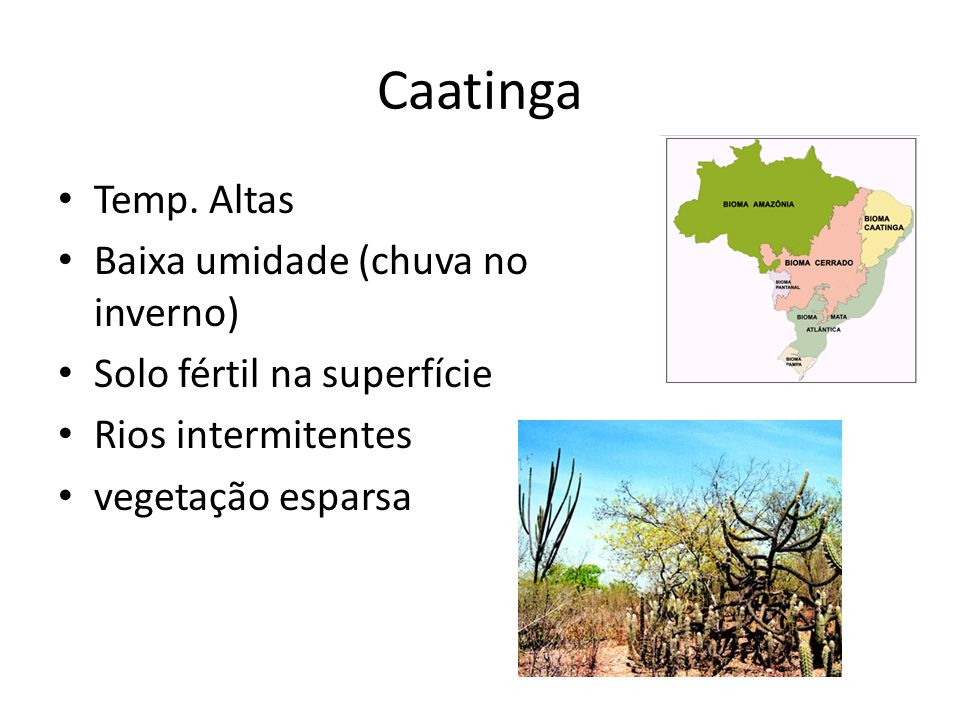 Caatinga Temp. Altas Baixa umidade (chuva no inverno)
