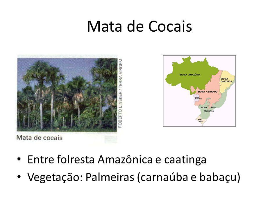 Mata de Cocais Entre folresta Amazônica e caatinga