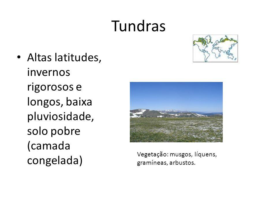 Tundras Altas latitudes, invernos rigorosos e longos, baixa pluviosidade, solo pobre (camada congelada)