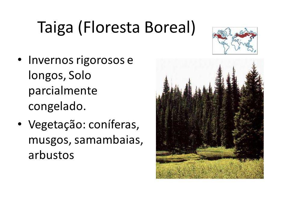 Taiga (Floresta Boreal)