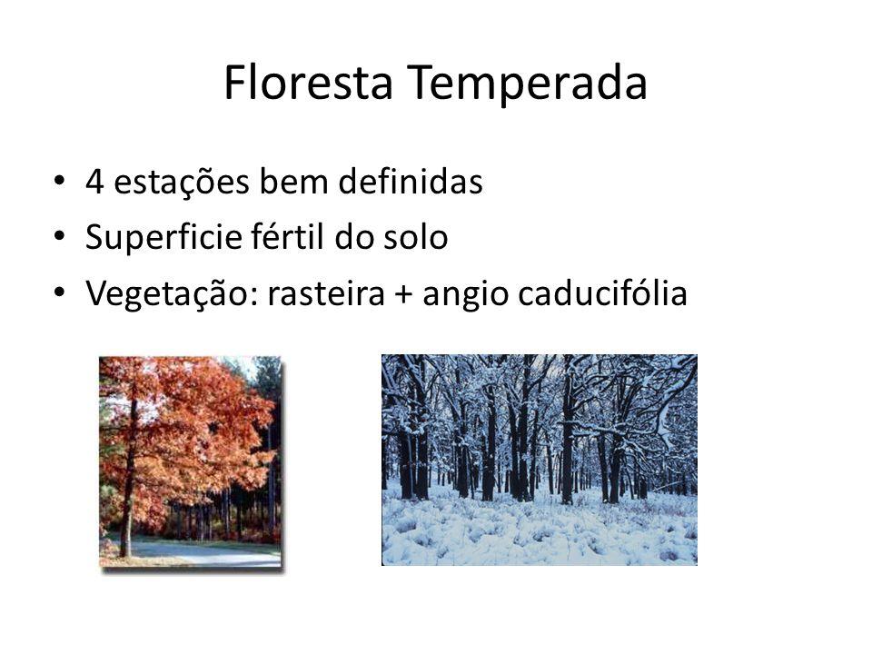 Floresta Temperada 4 estações bem definidas Superficie fértil do solo