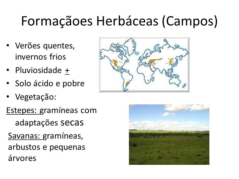 Formaçãoes Herbáceas (Campos)