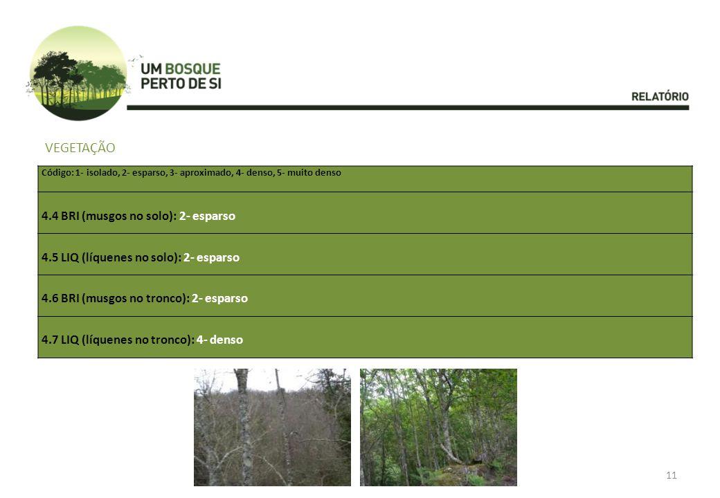 VEGETAÇÃO 4.4 BRI (musgos no solo): 2- esparso