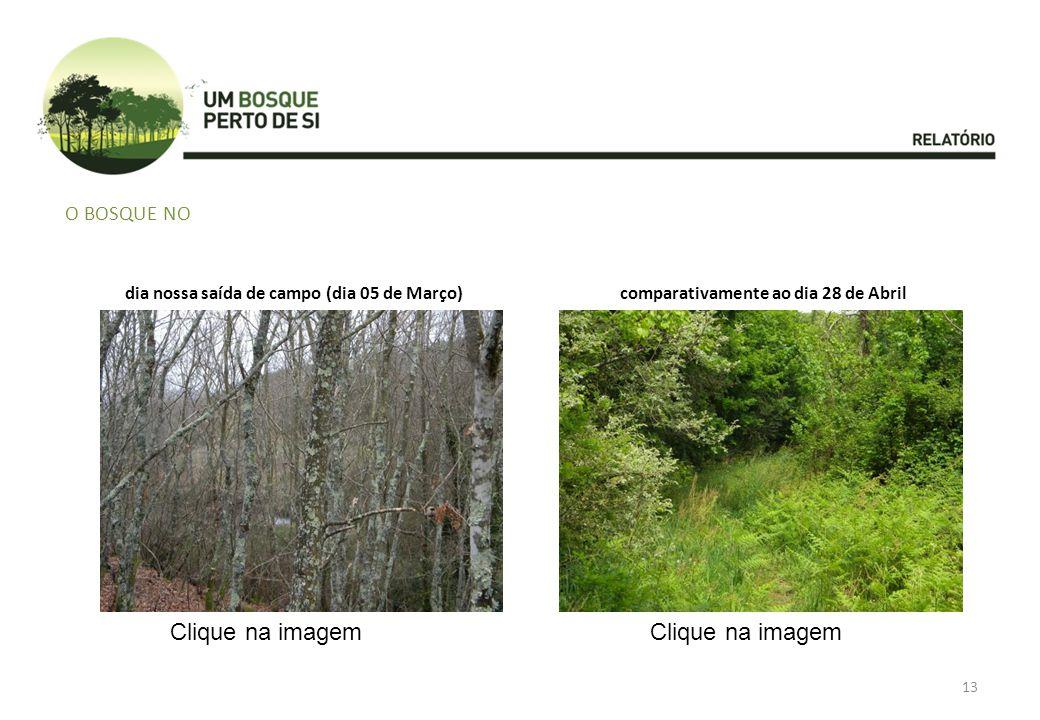 Clique na imagem Clique na imagem O bosque no