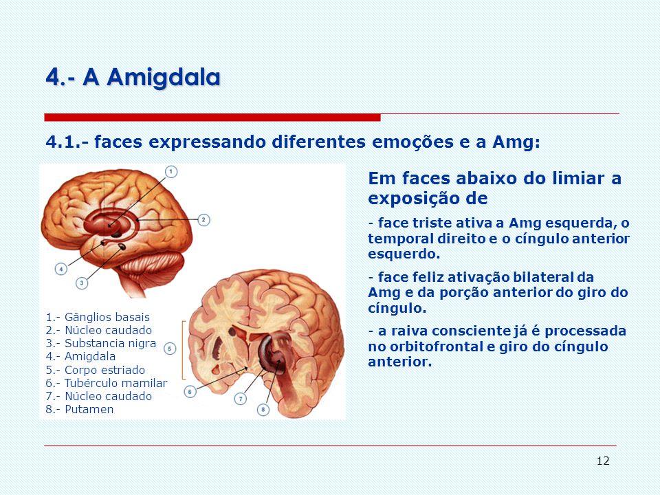 4.- A Amigdala 4.1.- faces expressando diferentes emoções e a Amg: