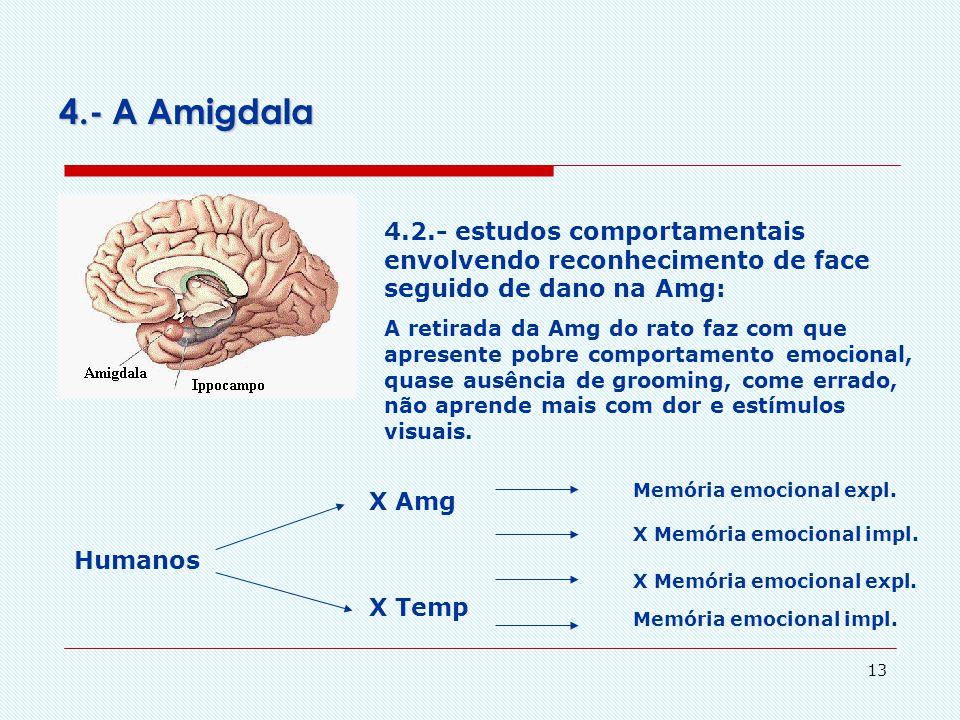 4.- A Amigdala 4.2.- estudos comportamentais envolvendo reconhecimento de face seguido de dano na Amg: