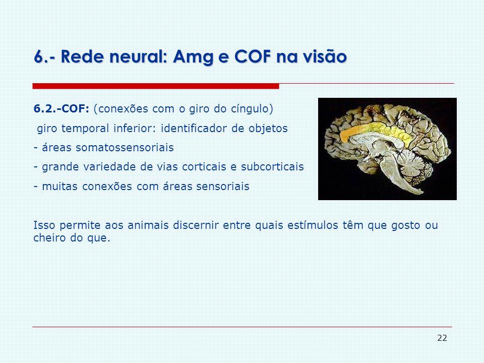 6.- Rede neural: Amg e COF na visão