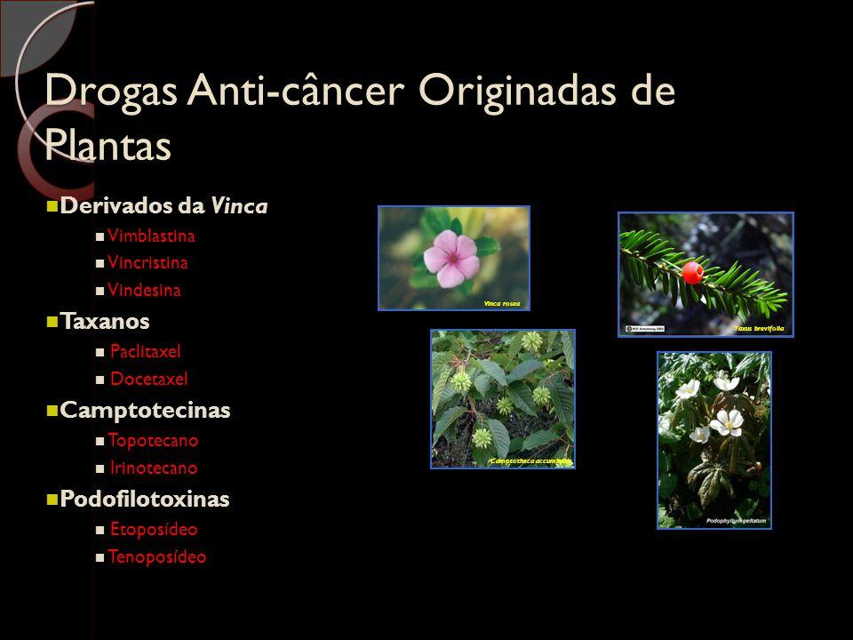 Drogas Anti-câncer Originadas de Plantas