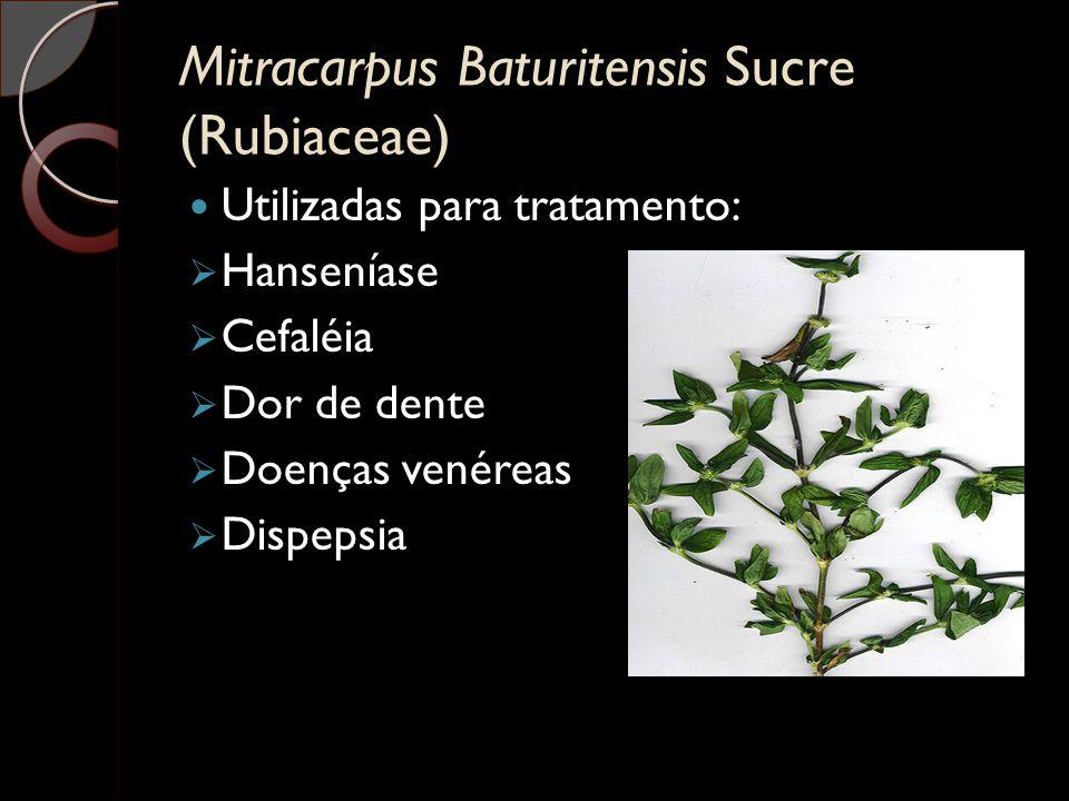 Mitracarpus Baturitensis Sucre (Rubiaceae)