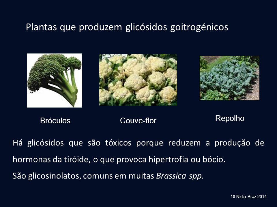 Plantas que produzem glicósidos goitrogénicos