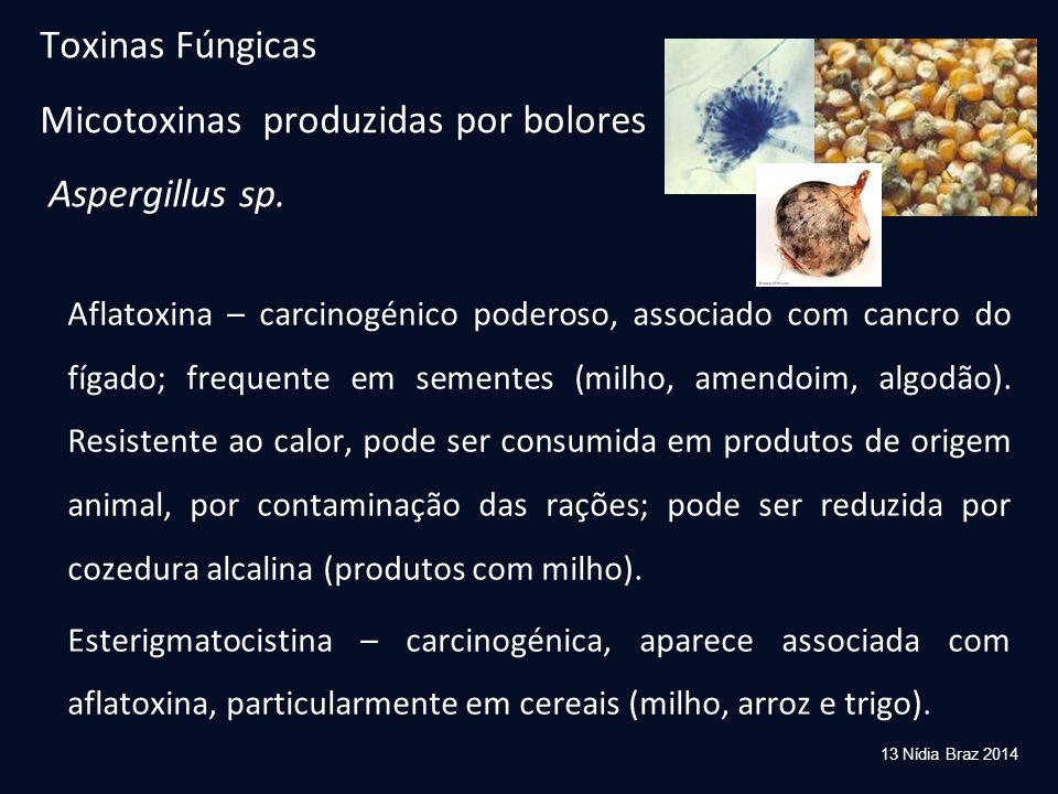 Toxinas Fúngicas Micotoxinas produzidas por bolores Aspergillus sp.