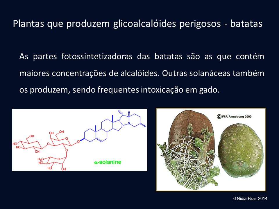 Plantas que produzem glicoalcalóides perigosos - batatas