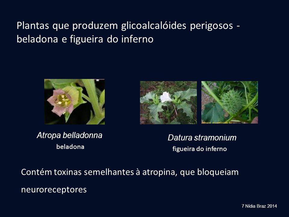 Plantas que produzem glicoalcalóides perigosos - beladona e figueira do inferno
