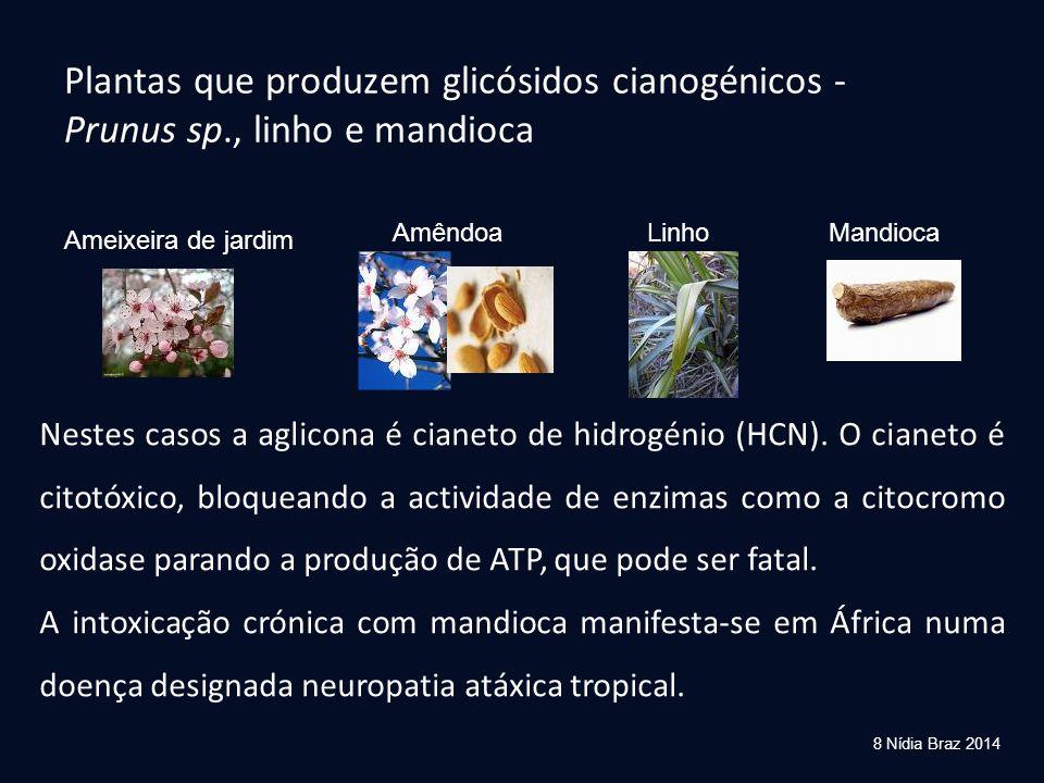 Plantas que produzem glicósidos cianogénicos - Prunus sp