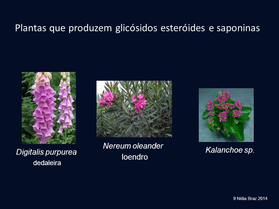 Plantas que produzem glicósidos esteróides e saponinas