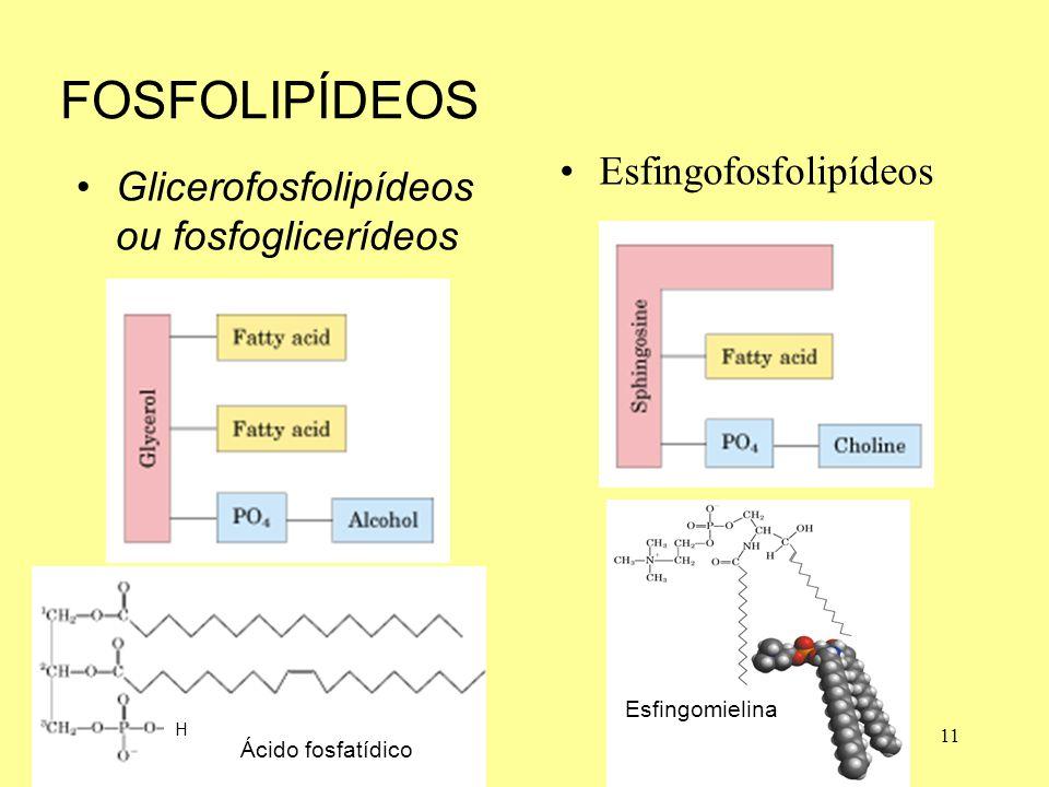 FOSFOLIPÍDEOS Esfingofosfolipídeos