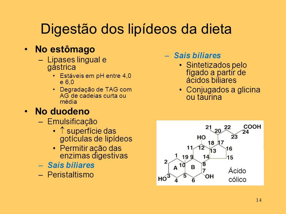 Digestão dos lipídeos da dieta