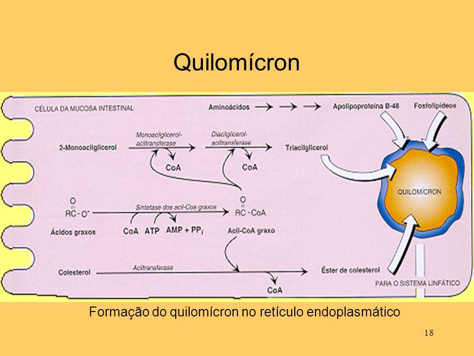 Quilomícron Formação do quilomícron no retículo endoplasmático