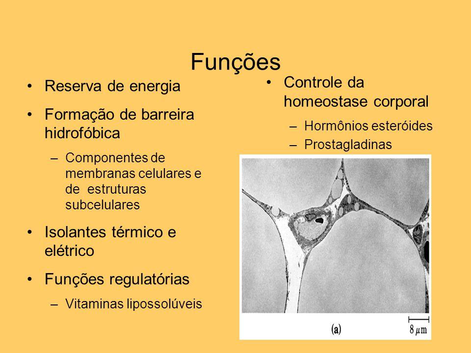 Funções Controle da homeostase corporal Reserva de energia