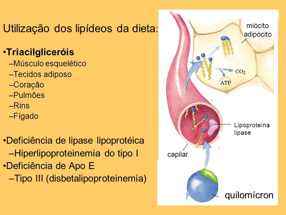 Utilização dos lipídeos da dieta: