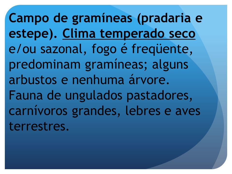 Campo de gramíneas (pradaria e estepe)