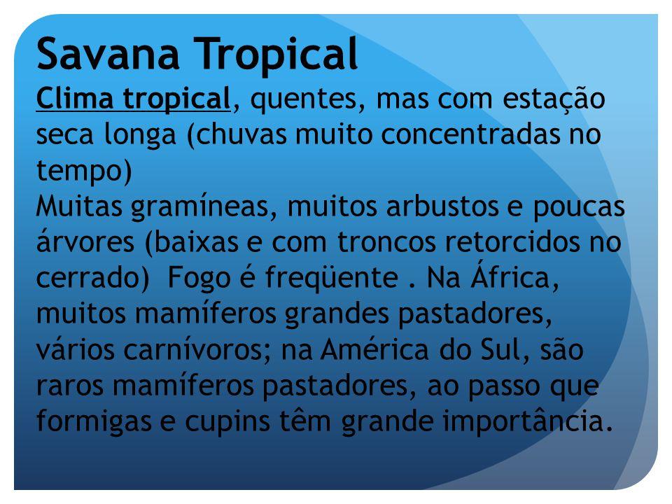 Savana Tropical Clima tropical, quentes, mas com estação seca longa (chuvas muito concentradas no tempo)