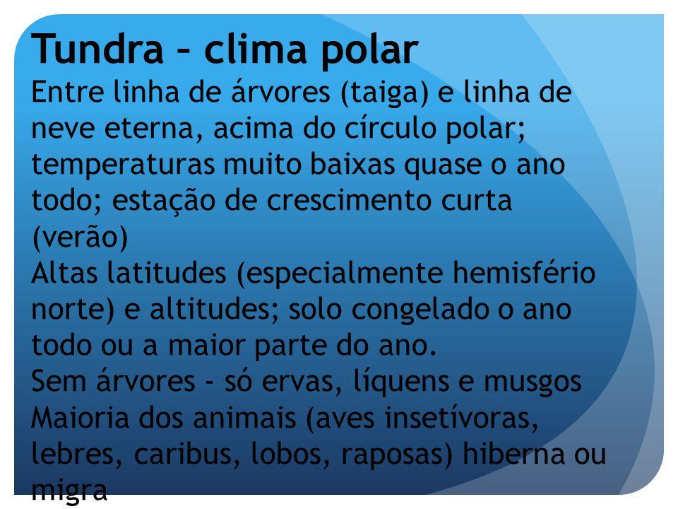 Tundra – clima polar