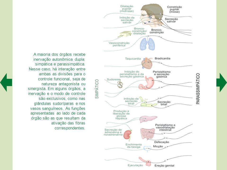A maioria dos órgãos recebe inervação autonômica dupla: simpática e parassimpática.
