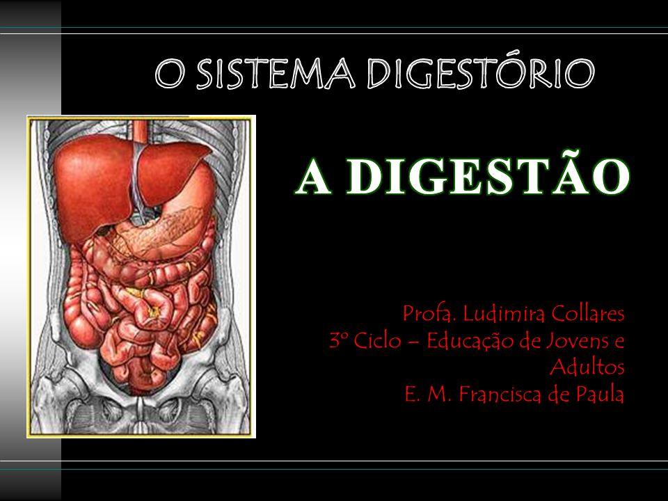 A DIGESTÃO O SISTEMA DIGESTÓRIO Profa. Ludimira Collares