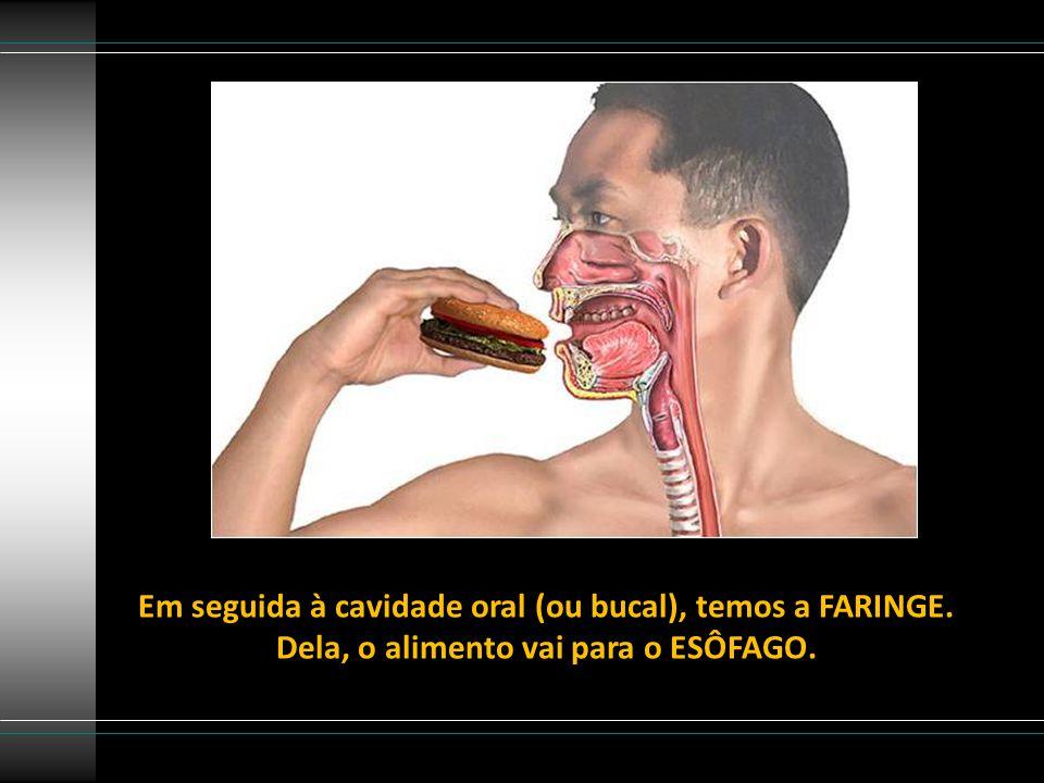 Em seguida à cavidade oral (ou bucal), temos a FARINGE.