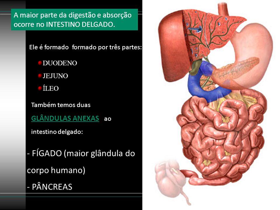 FÍGADO (maior glândula do corpo humano)