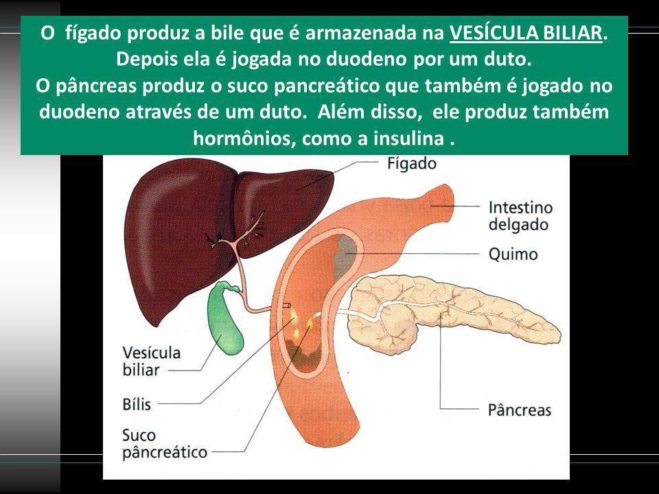 O fígado produz a bile que é armazenada na VESÍCULA BILIAR