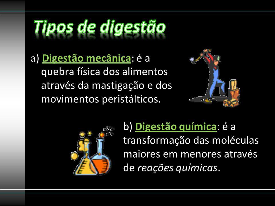 Tipos de digestão a) Digestão mecânica: é a quebra física dos alimentos através da mastigação e dos movimentos peristálticos.