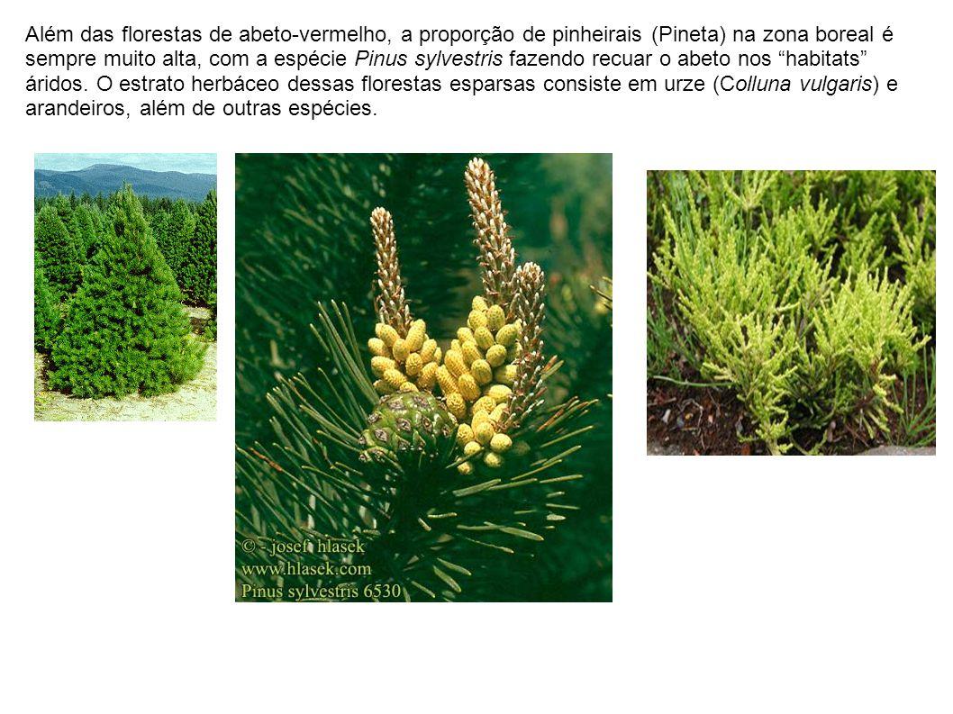 Além das florestas de abeto-vermelho, a proporção de pinheirais (Pineta) na zona boreal é sempre muito alta, com a espécie Pinus sylvestris fazendo recuar o abeto nos habitats áridos.