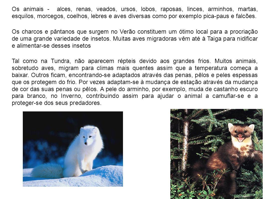 Os animais - alces, renas, veados, ursos, lobos, raposas, linces, arminhos, martas, esquilos, morcegos, coelhos, lebres e aves diversas como por exemplo pica-paus e falcões.