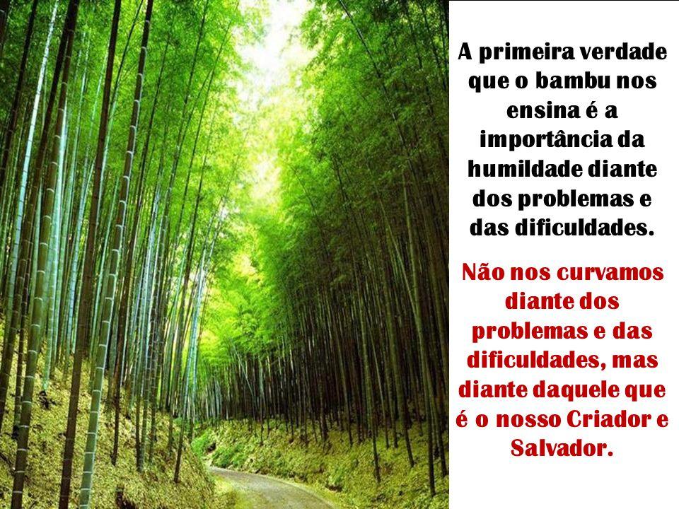 A primeira verdade que o bambu nos ensina é a importância da humildade diante dos problemas e das dificuldades.